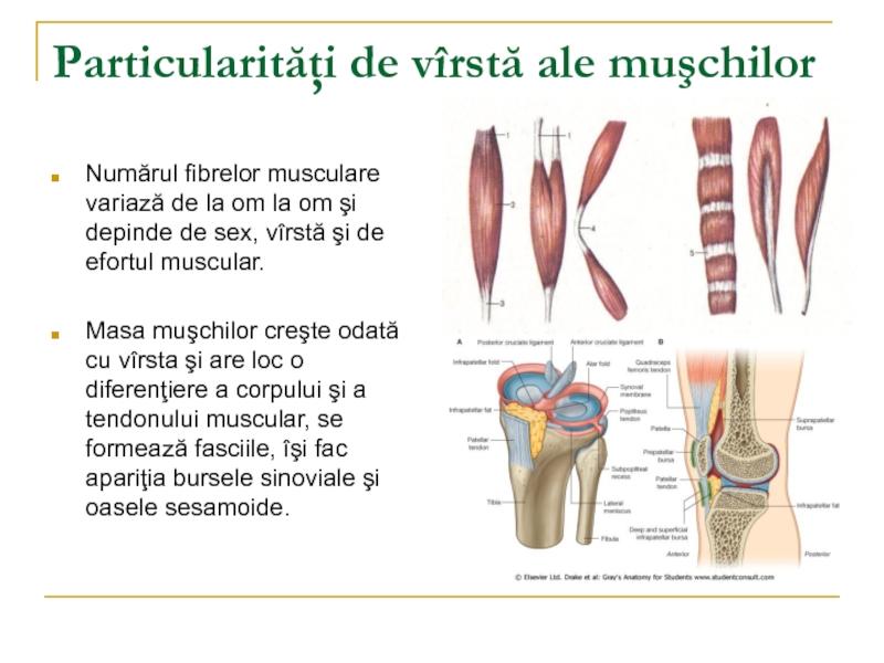 poate răni articulațiile din pastile hormonale unguent eficient pentru inflamația articulațiilor